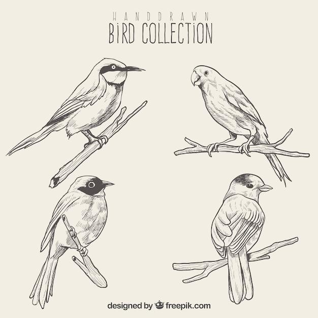 Set of bird sketches Free Vector