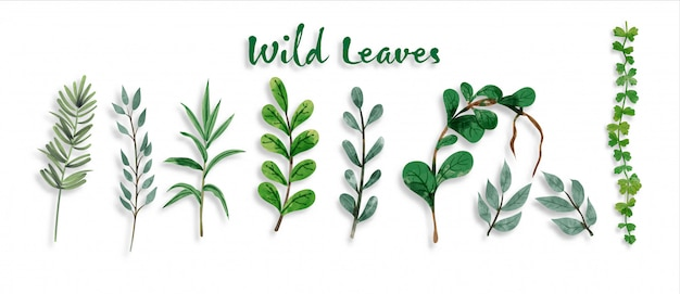 Set of botanic and wild leaves in watercolor painting Premium Vector
