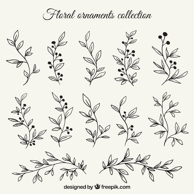 Set of branches with hand drawn leaves Free Vector