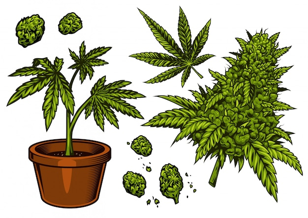 Set of cannabis objects Premium Vector