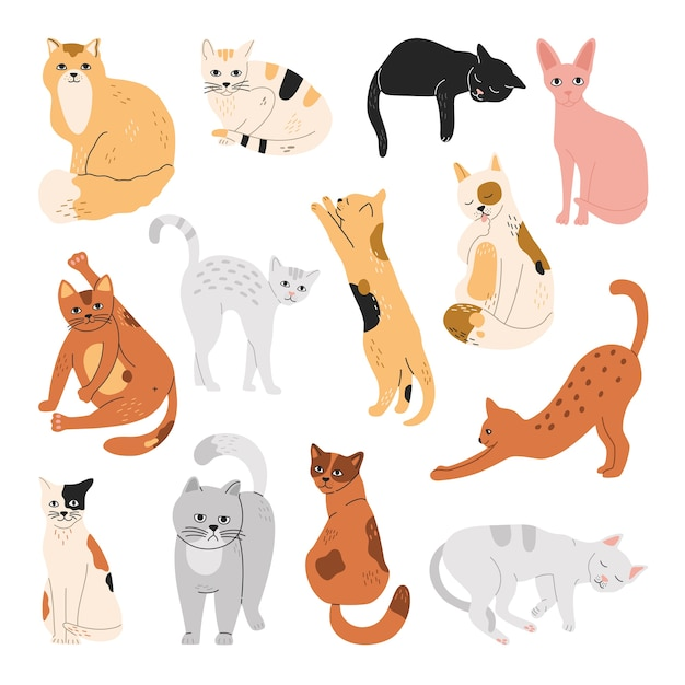 Set of cats, funny pets, sleeping, sitting, standing in different poses.