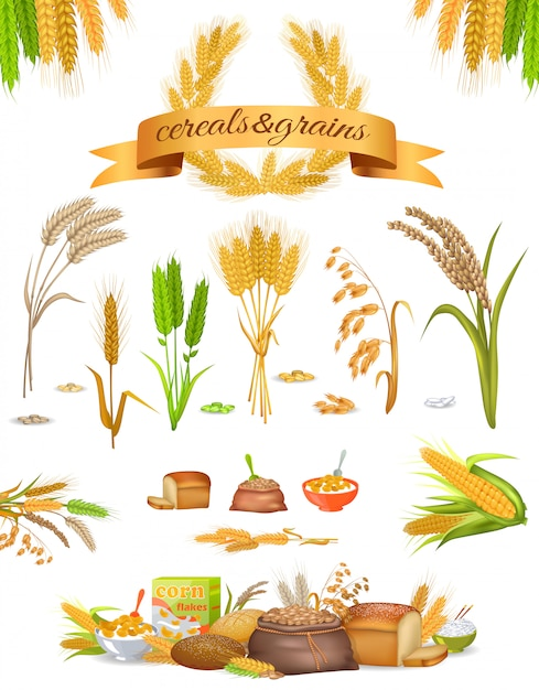 Set of cereals and grains on white background Premium Vector