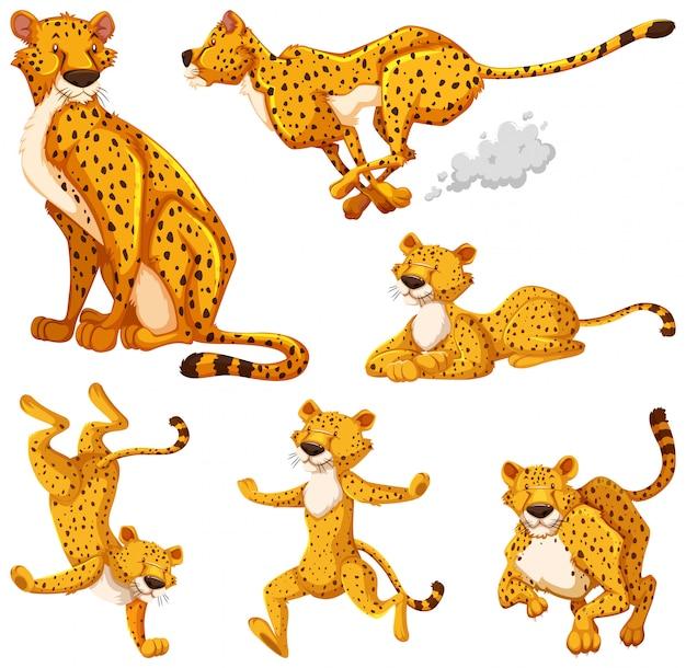 Set of cheetah cartoon character Free Vector