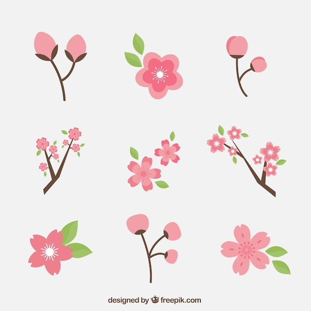 Set of cherry blossoms Free Vector
