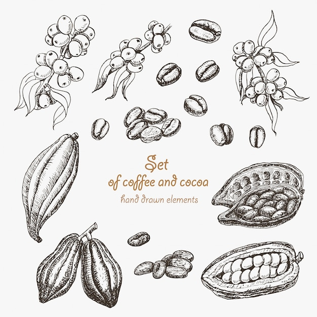 Set of coffee and cocoa Premium Vector