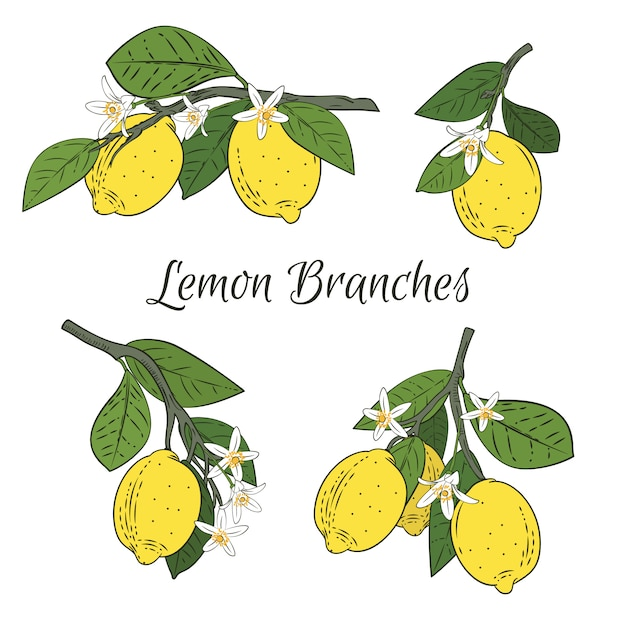Set collection of branches with lemons Premium Vector