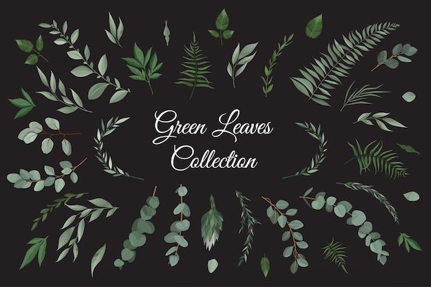 Set collection of green leaves herbs in watercolor style. Premium Vector