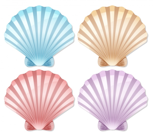 Set of color scallop shell Free Vector