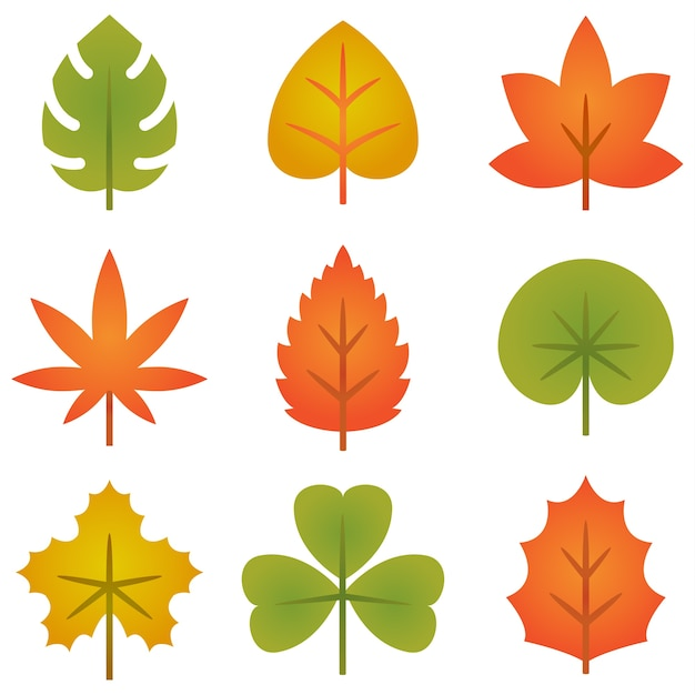Set of colorful autumn leaves collection Premium Vector
