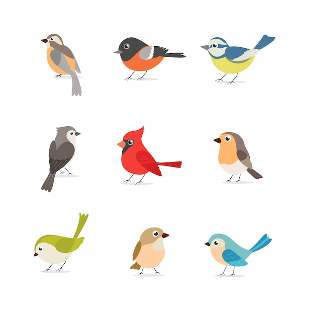Set of colorful birds isolated on white Premium Vector