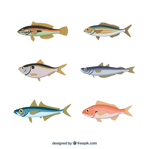 Set of colorful fishes in hand drawn style Free Vector