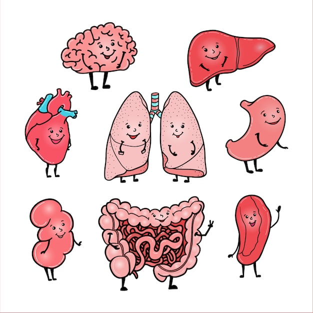 Set of cute and funny human organs - brain, heart, liver, kidney, intestine, stomach, lungs and spleen, cartoon style Premium Vector