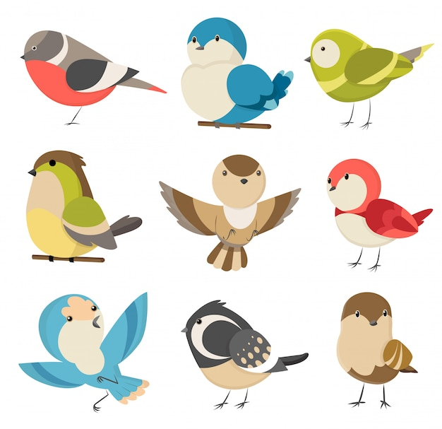 Premium Vector Set Cute Little Colorful Birds Isolated On White Common House Sparrow Couple Male And Female Small Birds In Cute Cartoon Style Isolated Clip Art Illustration