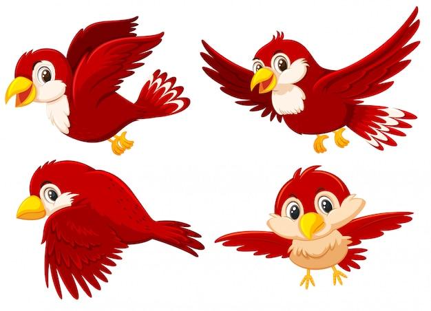 Set of cute red birds Premium Vector