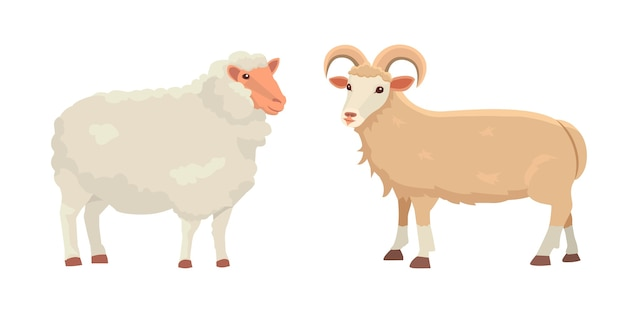 Set cute sheep and ram isolated retro illustration. standing sheeps silhouette on white. farm fanny milk young animals Premium Vector