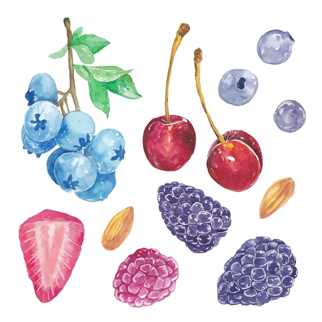 Set of cute watercolor berries fruit, cherry, blackberry, gooesberry, strawberry Premium Vector