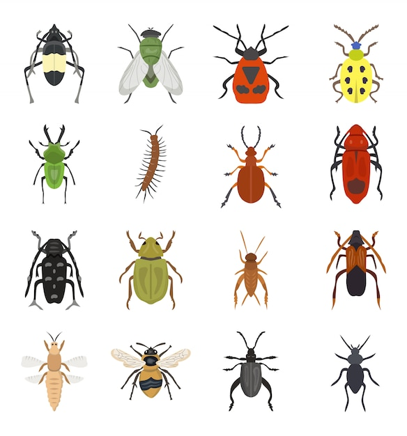 Set of dangerous beetles insects premium Premium Vector