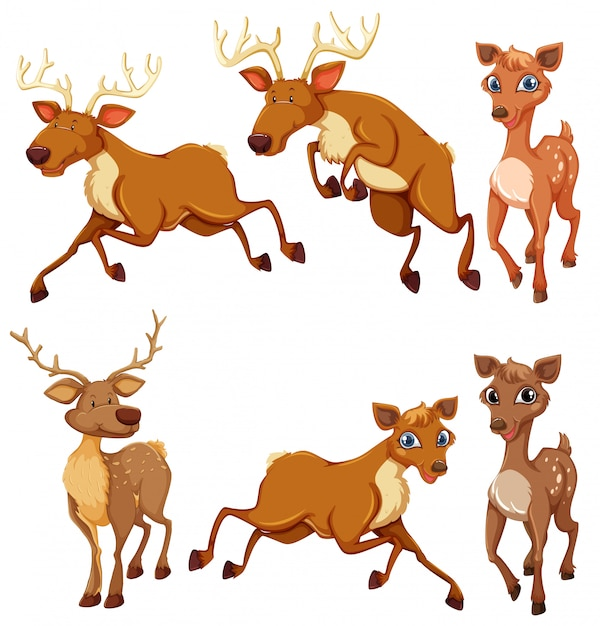 Set of deer and position Free Vector