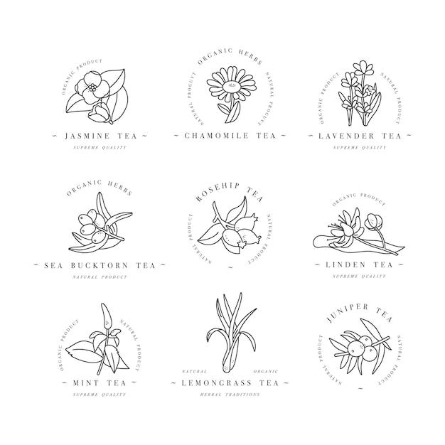 mẫu logo các loại thảo mộc và trà hữu cơ  và biểu tượng đầy màu sắc