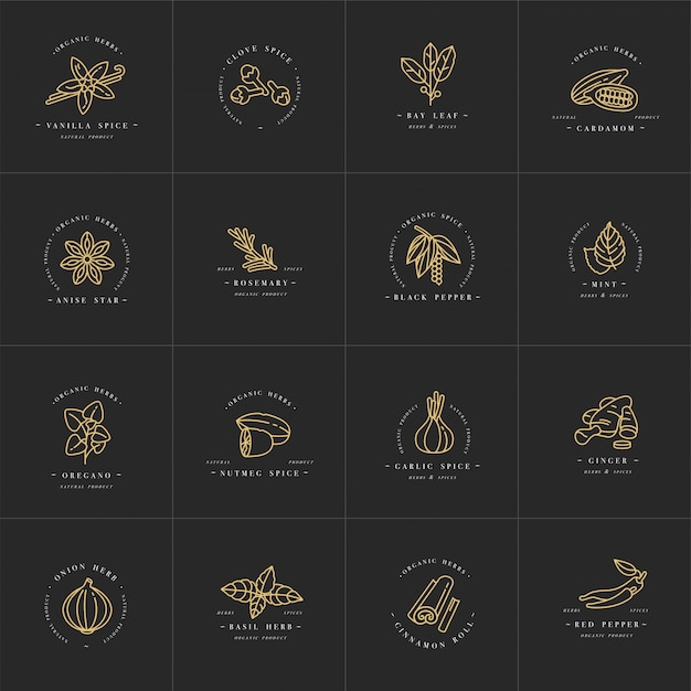 Set design templates monochrome logo and emblems - herbs and spices. different spices icon. logos in trendy linear style isolated on white background. Premium Vector