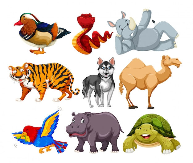 Set of different animal character Free Vector