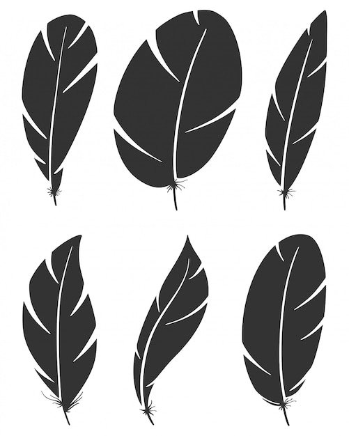 Set of different bird wing feathers Premium Vector