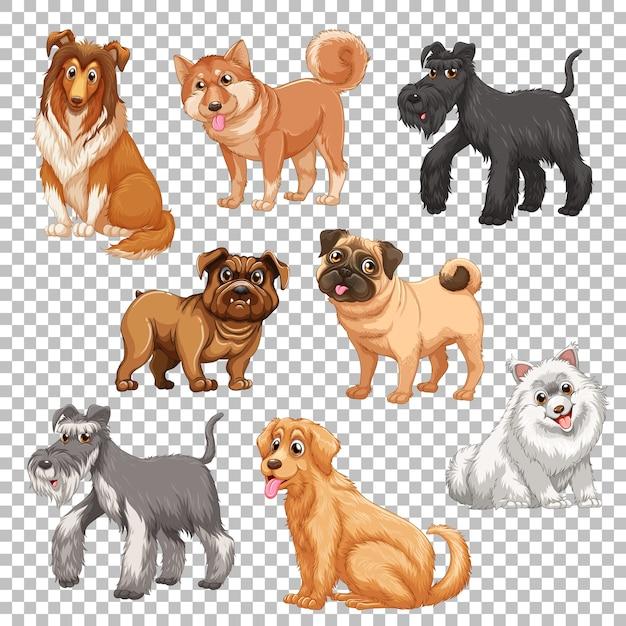 Set di diversi cani isolati Vettore gratuito