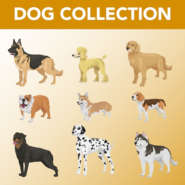 Set of dog breeds collection Premium Vector