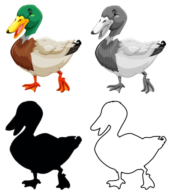 Set of duck character Free Vector