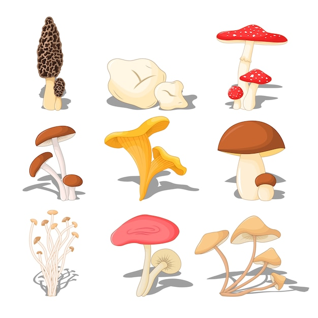 Set edible mushrooms with shadow, three-dimensional on white background Premium Vector