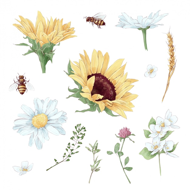 Set of elements of sunflowers and wildflowers in digital watercolor style Premium Vector