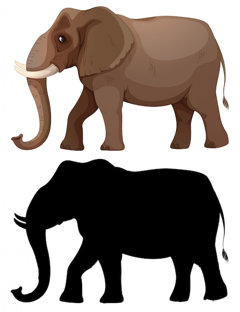 Set of elephant character Free Vector