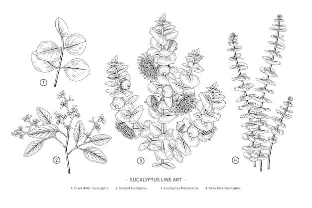 Set of eucalyptus branch botanical Premium Vector