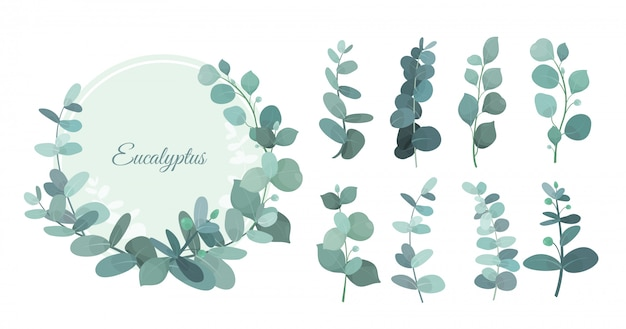 Set eucalyptus leafs, branches. cute herbs for wedding greenery, decorative elements for invintations and greeting cards. blue eucalyptus wreath, leaves and stems in flat style. Premium Vector