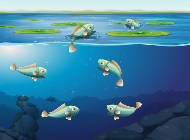 Set of fish underwater Free Vector