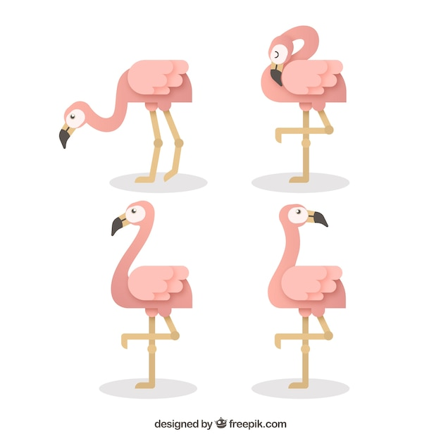 Set of flamingos with different postures Free Vector