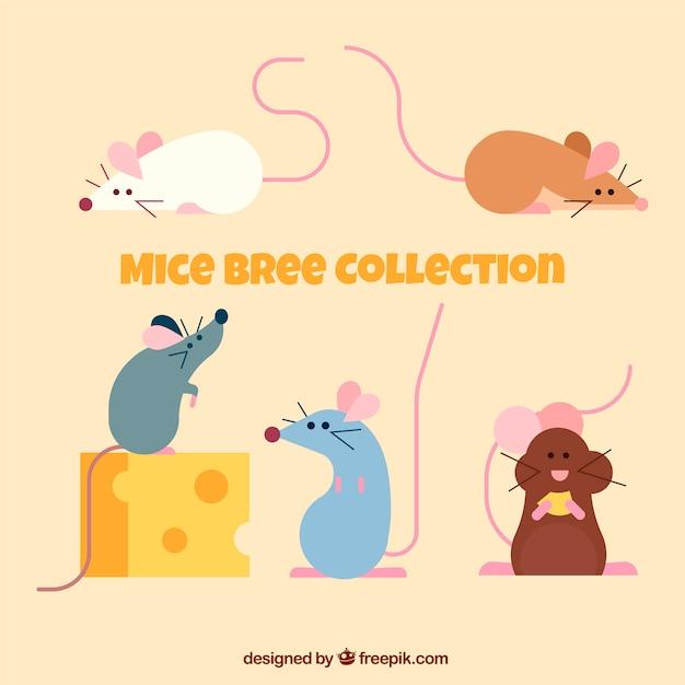 Set of flat mice breeds Free Vector