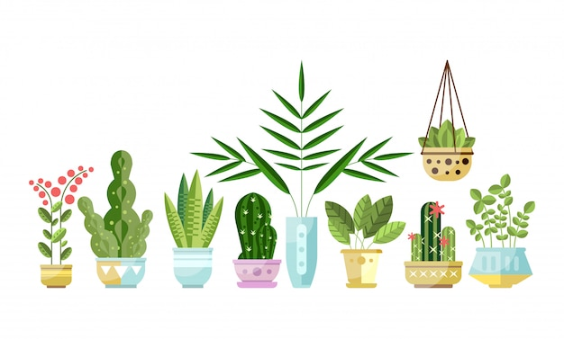 Set of flat style colorful houseplants in pots standing in line. home decorative plants. Premium Vector