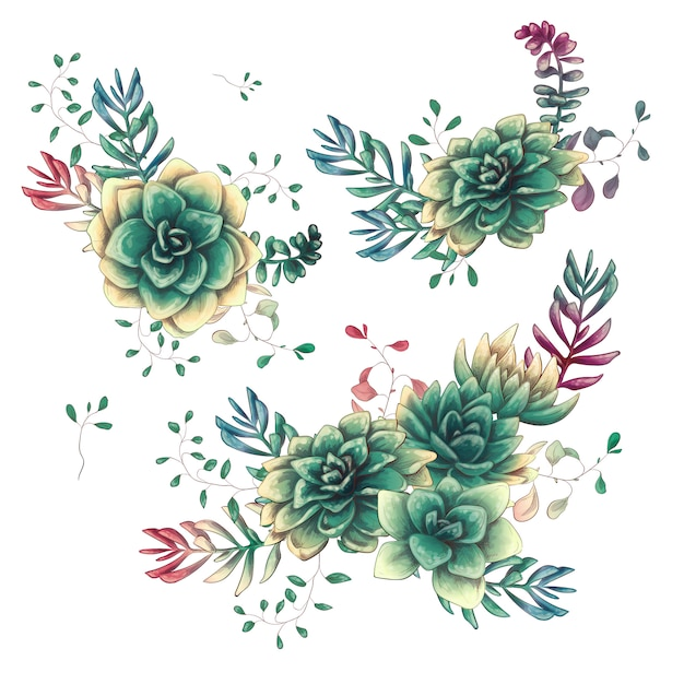 Set of floral succulents compositions in hand draw style. Premium Vector
