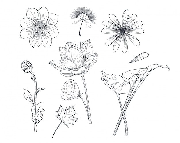 Set flower in drawing style Premium Vector