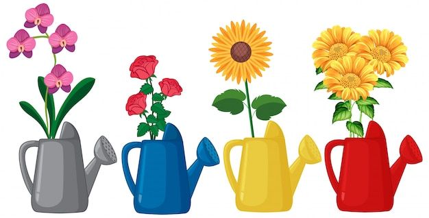 Set of flowers in watering can on white background Free Vector