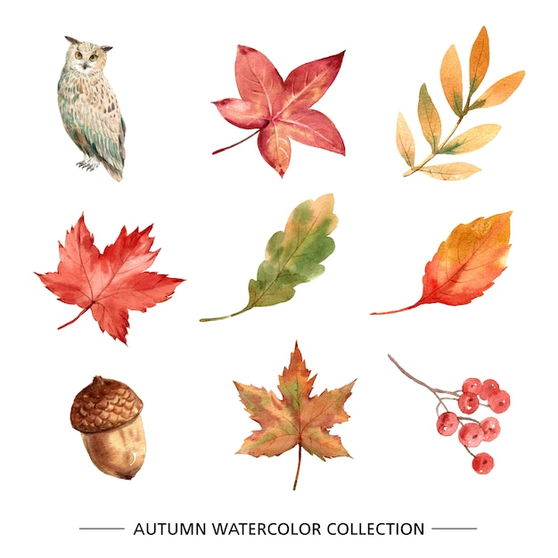 Set of foliage with watercolor Free Vector