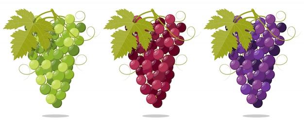 Набор свежий гроздь винограда фиолетовый белый и роза Premium векторы