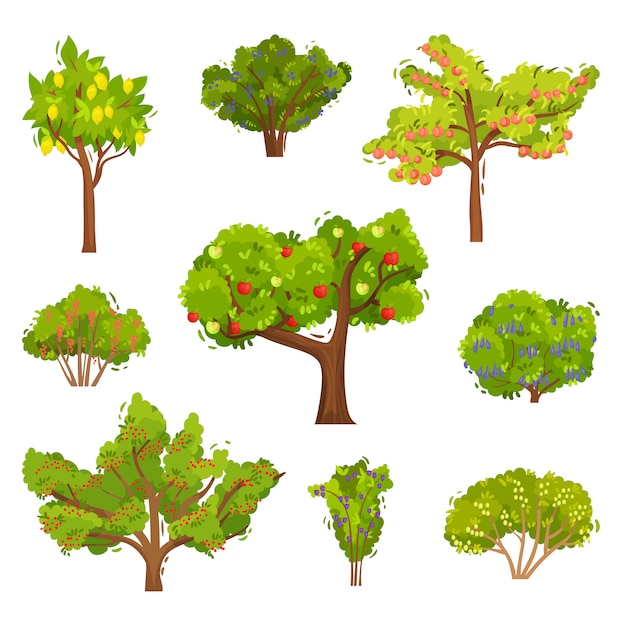 Set of fruit trees and berry bushes. agricultural plants. elements for book about gardening Premium Vector