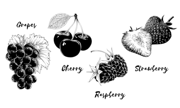 Set of fruits and berries, isolated on white background. hand-drawn elements such as grape, cherry, strawberry and raspberry. vector illustration Premium Vector