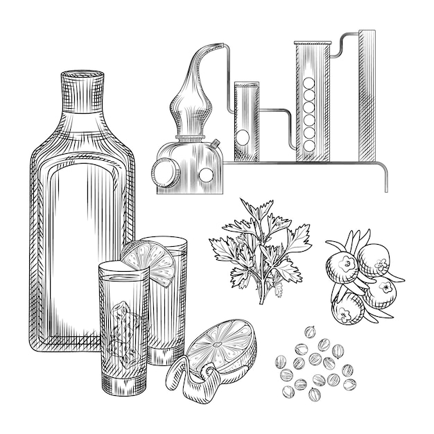 Set of gin in hand drawn style on white background.glasses with gin and tonic cocktail, alembic, coriander, lemon peel. Premium Vector