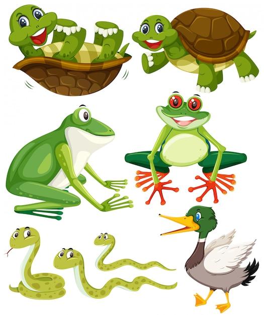 Set of green animals Premium Vector