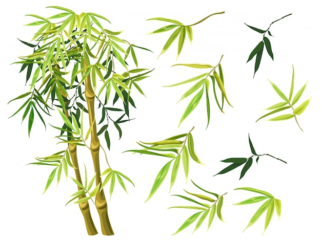 Set of green bamboo stems and leaves. Premium Vector