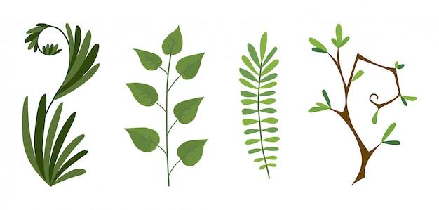 Set of green forest fern, tropical green eucalyptus greenery art foliage natural branch Premium Vector