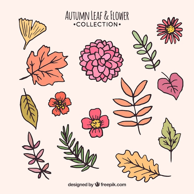 free vector | set of hand drawn autumn leaves and flowers  freepik